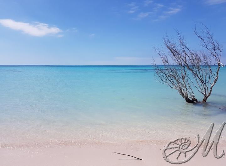 cayo-jutias-la-spiaggia-piu-bella-di-cuba