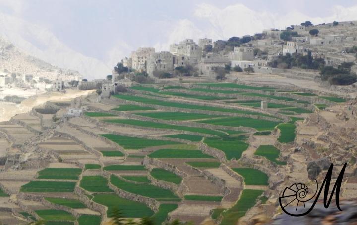 yemen terrazzamenti.jpg