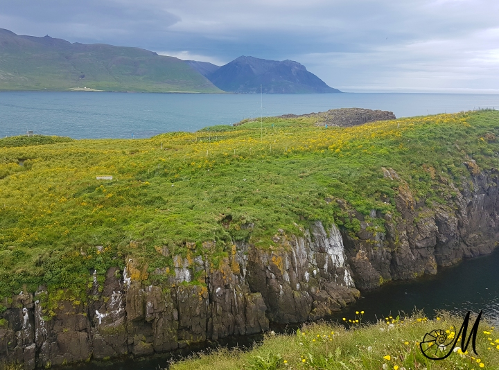 hafnarholmi-pulcinella-islanda.jpg