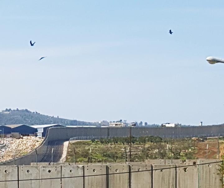 muro gerusalemme palestina